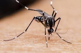 Malaria eradication-ExxonMobil says it has committed $170m sofar